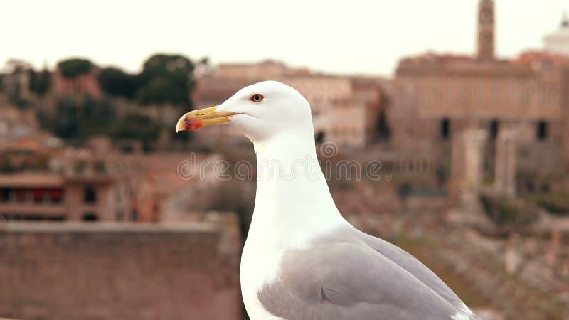 Opinión del primer la gaviota blanca que se sienta en el tejado superior y que mira alrededor Ir volando del pájaro contra la per foto de archivo