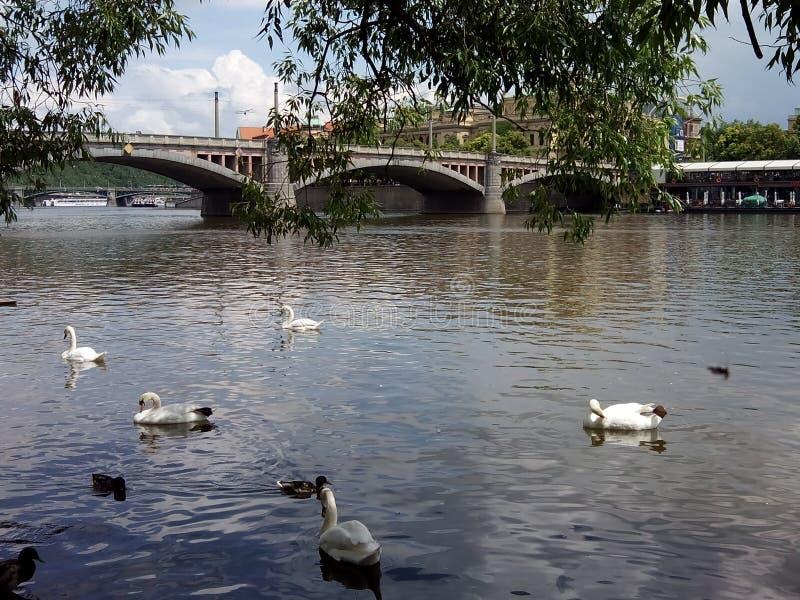 Opinión del río de Moldava fotografía de archivo
