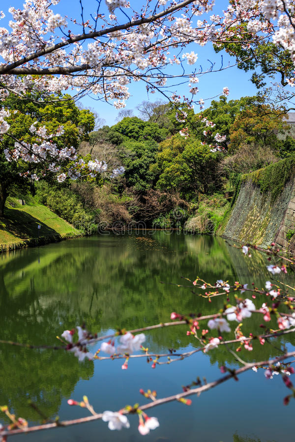 Opinión del río a través de Sakura fotos de archivo