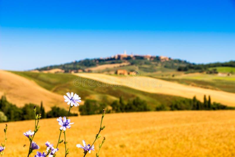 Opinión del verano del país de Toscana cerca de Pienza, Italia fotos de archivo libres de regalías