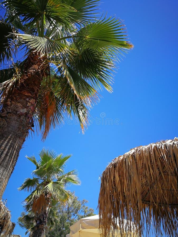 Opinión del verano sobre la playa Palmas griegas foto de archivo libre de regalías