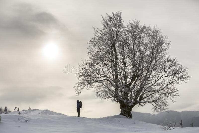 Opinión el caminante turístico con la situación de la mochila en la nieve profunda limpia blanca en el árbol grande en el fondo d foto de archivo libre de regalías