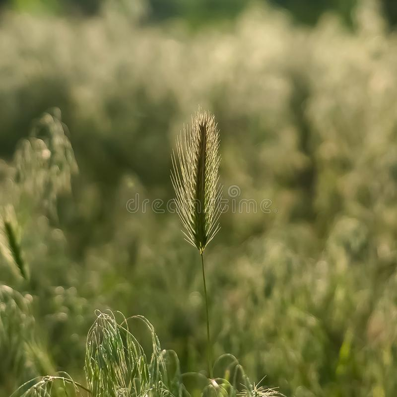 Opinión escénica del día soleado del cuadrado las hierbas verdes abundantes que prosperan en el bosque fotos de archivo libres de regalías