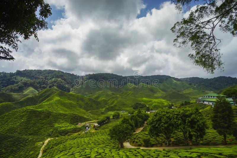 Opinión fresca de plantación de té verde cerca de la montaña con el cielo azul hermoso en Cameron Highland foto de archivo libre de regalías