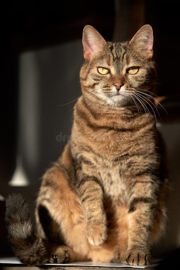 Opinión frontal el gato foto de archivo libre de regalías