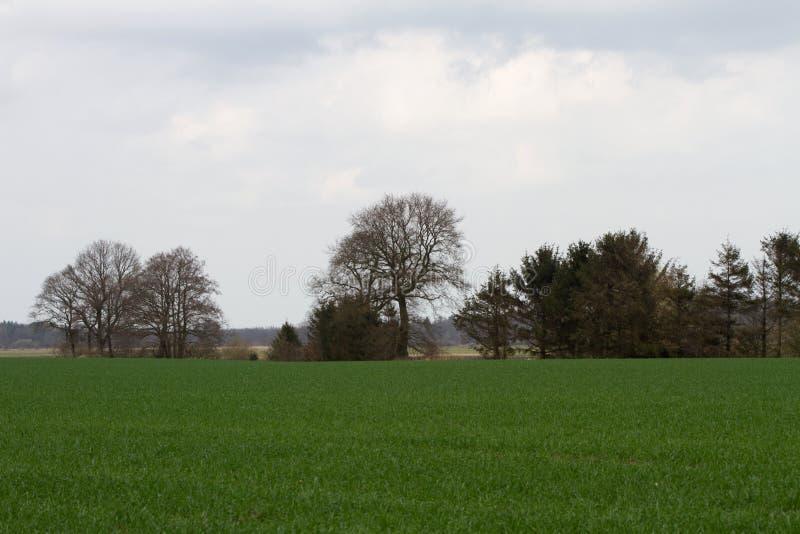Opinión granangular sobre un prado y un paisaje de un campo en al noroeste de Alemania fotos de archivo libres de regalías