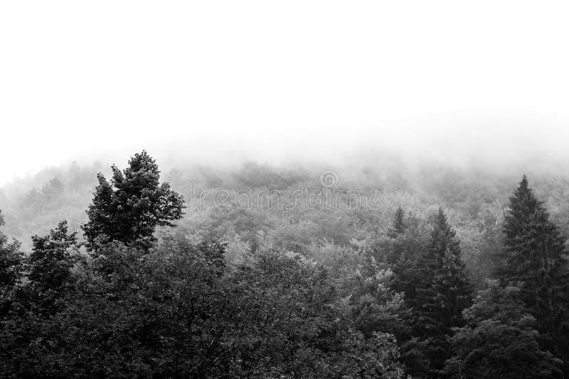 Opinión hermosa blanco y negro de la naturaleza del bosque imagen de archivo libre de regalías