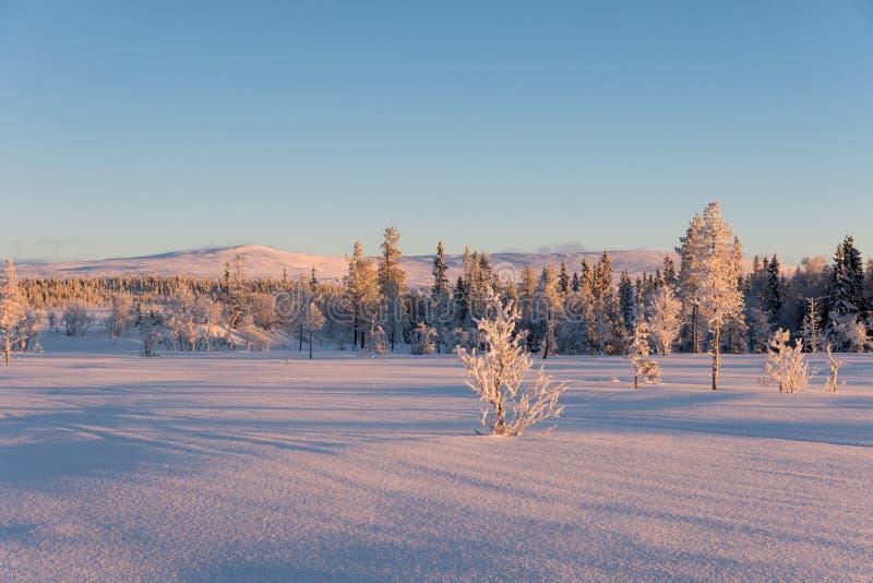 Opinión hermosa del invierno desde arriba de una montaña sueca imágenes de archivo libres de regalías