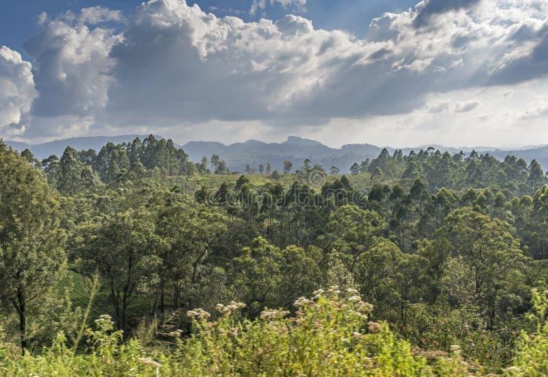 Opinión hermosa del paisaje del bosque debajo del cielo nublado imagenes de archivo