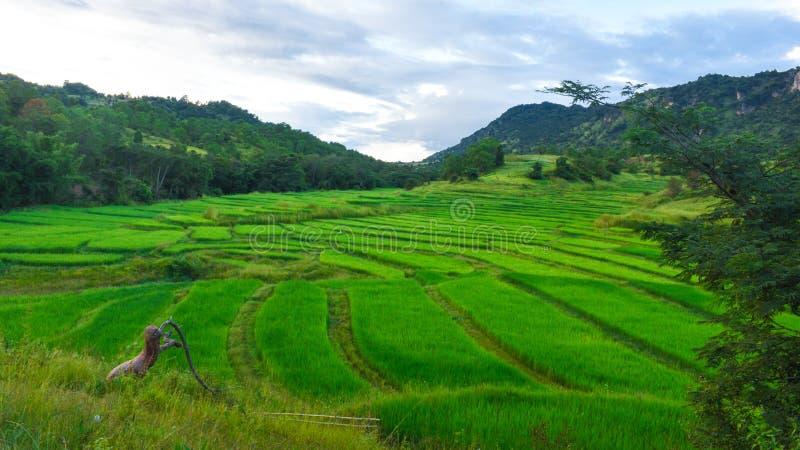 Opinión hermosa del paisaje con el campo verde de la terraza imagen de archivo