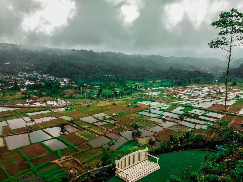 Opinión hermosa del paisaje de campos del arroz y de un banco de parque blanco en la colina de Santi del kai, tomohon Indonesia imagenes de archivo