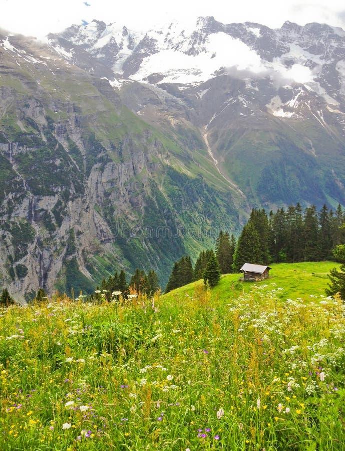 Opinión hermosa del paisaje de Murren, cabaña de la montaña del verano con el valle de Lauterbrunnen y montañas del suizo en el f imágenes de archivo libres de regalías