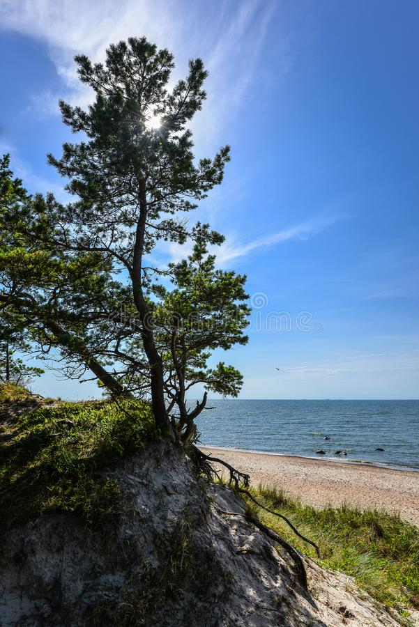 Opinión hermosa del verano del mar Báltico, de la playa arenosa, del bosque y del cielo azul brillante, escupitajo de Curonian, K fotos de archivo