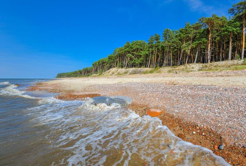 Opinión hermosa del verano del mar Báltico, de la playa arenosa y del bosque del pino, escupitajo de Curonian, Klaipeda, Lituania imagenes de archivo