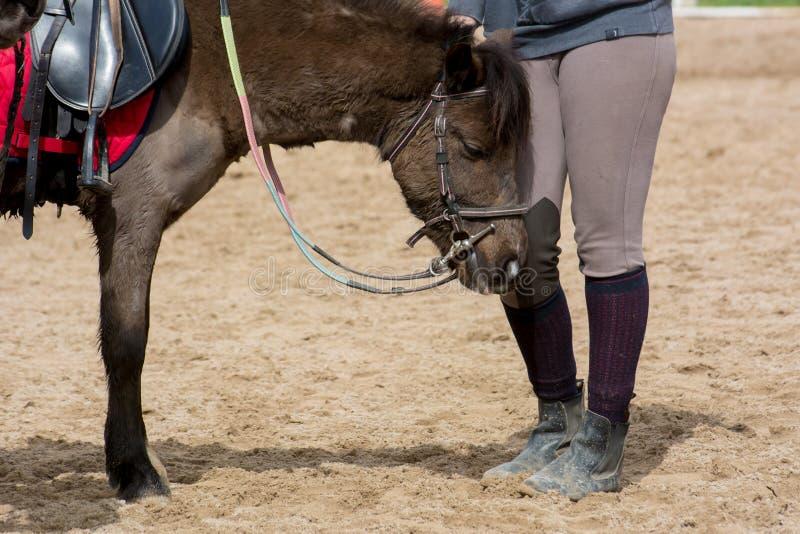 Opinión horizontal una muchacha que acaricia un caballo en el Sc ecuestre foto de archivo