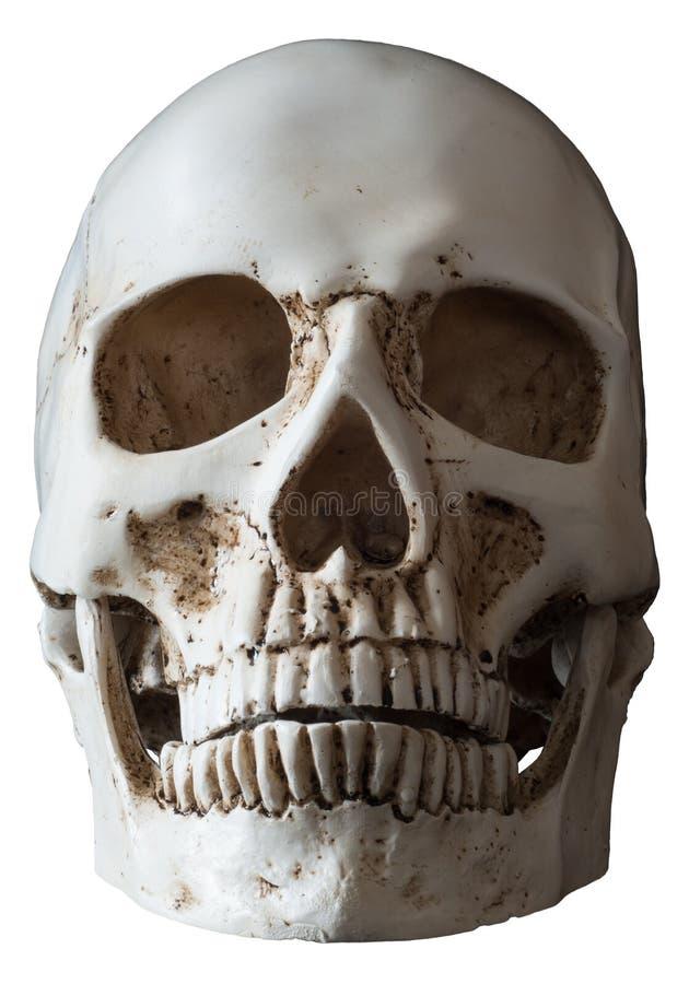 Opinión humana aislada del frontal del cráneo imagenes de archivo