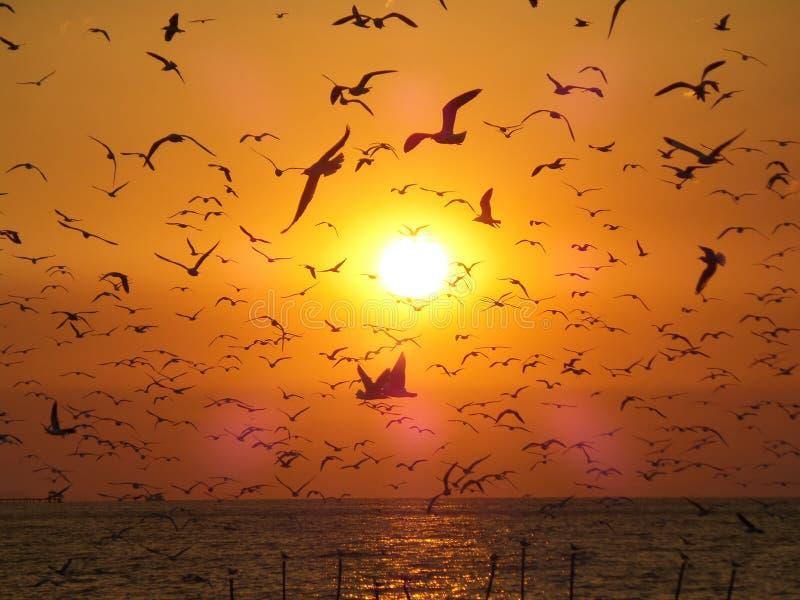 Opinión increíble las gaviotas no numerables del vuelo contra la mañana de oro Sun fotografía de archivo libre de regalías