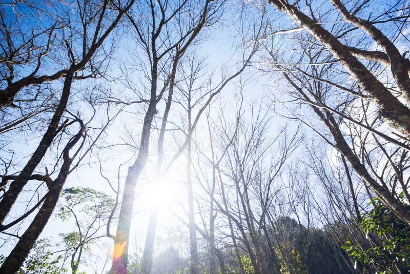 Opini?n inferior del paisaje del bosque del oto?o, troncos de ?rbol deshojados que se colocan en las monta?as en el ?ltimo tiempo imagen de archivo libre de regalías