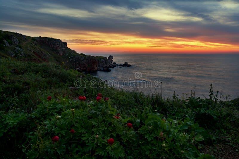 Opinión magnífica de la salida del sol con las peonías salvajes hermosas en la playa cerca de Tylenovo, Bulgaria imagen de archivo libre de regalías