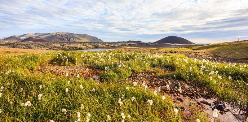 Opinión panorámica del paisaje islandés hermoso del verano con el prado, las cordilleras coloridas, y el cielo hermoso como fondo imágenes de archivo libres de regalías