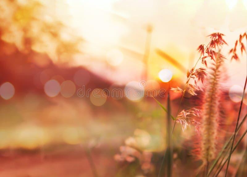 Opinión romántica de la naturaleza de la flor y de la puesta del sol de la hierba para la tarjeta del día de San Valentín imagen de archivo