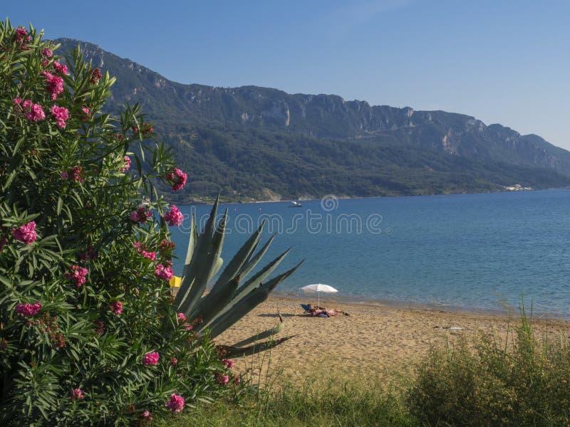 Opinión sobre la playa y el mar de la arena en Agios Georgios Pagon en la isla de Corfú, Grecia con el adelfa rosado floreciente  imagenes de archivo