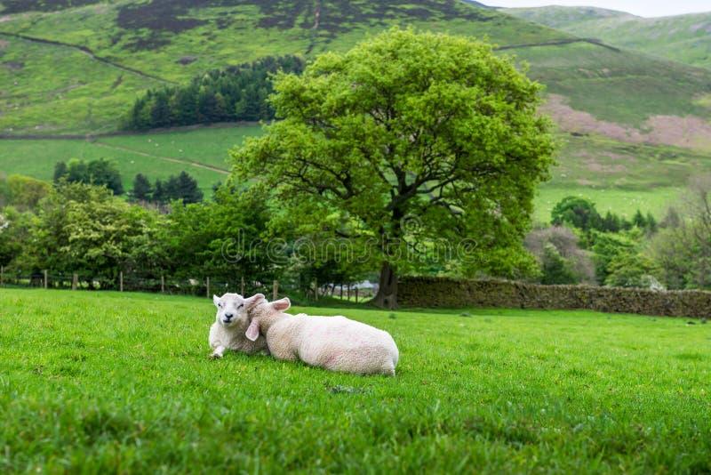 Opinión sobre las colinas cerca de Edale, parque nacional del distrito máximo, Reino Unido fotos de archivo