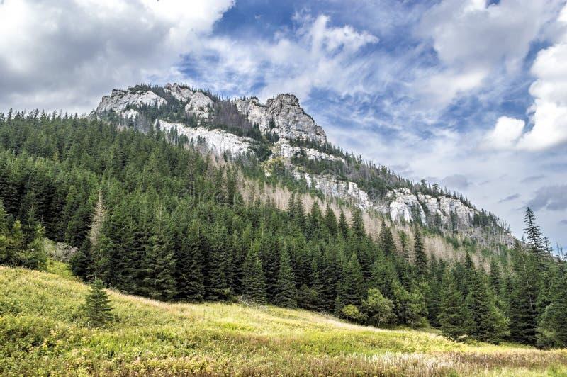 Opinión sobre rocas en el valle de Koscielisko en las montañas de Tatra fotos de archivo libres de regalías