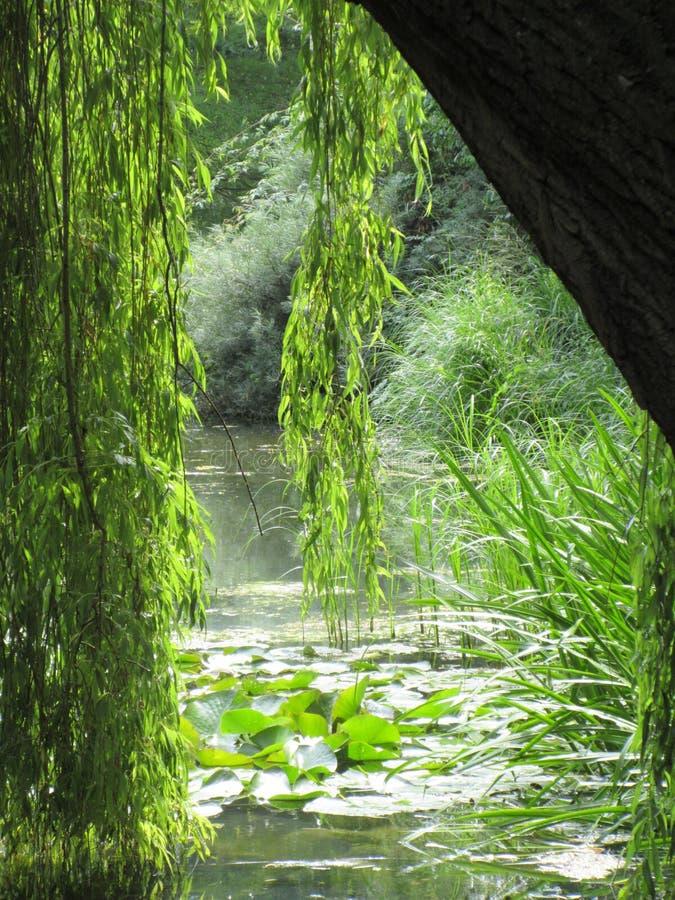 Opinión soleada gloriosa del lago debajo de un sauce llorón fotografía de archivo