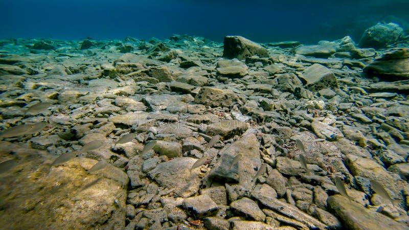 Opinión subacuática sobre la parte inferior de mar rocosa imagen de archivo libre de regalías