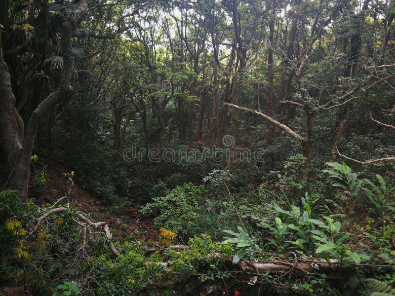 opinión subtropical del bosque del lado ascendente de la montaña foto de archivo