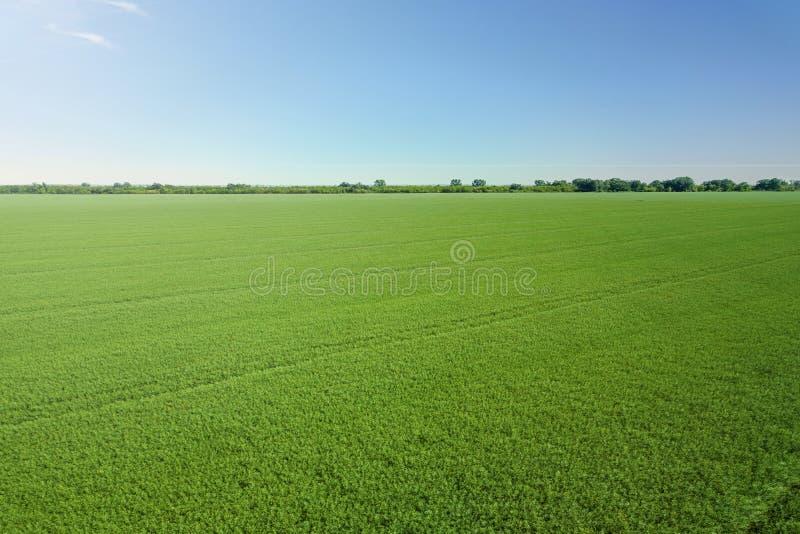 Opinión superior de la rabina del campo verde de la agricultura rabina imagenes de archivo