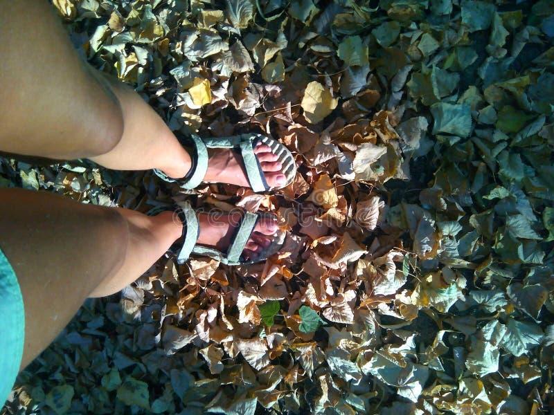 Opinión superior de las hojas de otoño y de las piernas femeninas foto de archivo