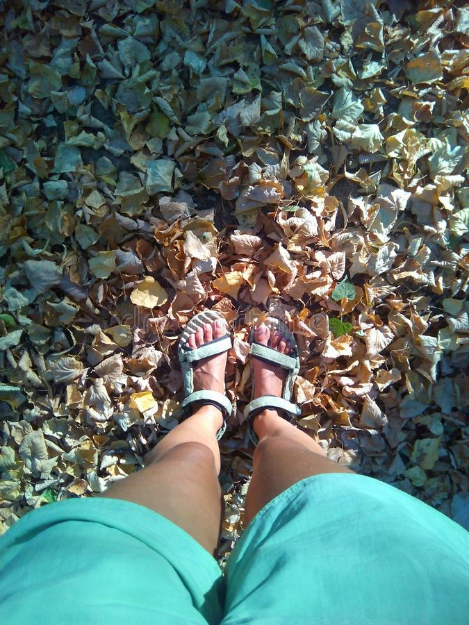 Opinión superior de las hojas de otoño y de las piernas femeninas fotografía de archivo