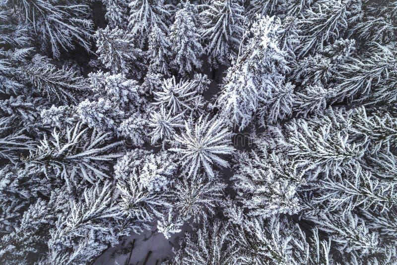 Opinión superior del abejón Forest Trees nevado foto de archivo libre de regalías