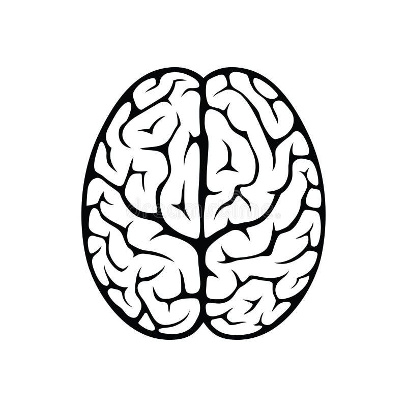 Opinión superior del cerebro ilustración del vector