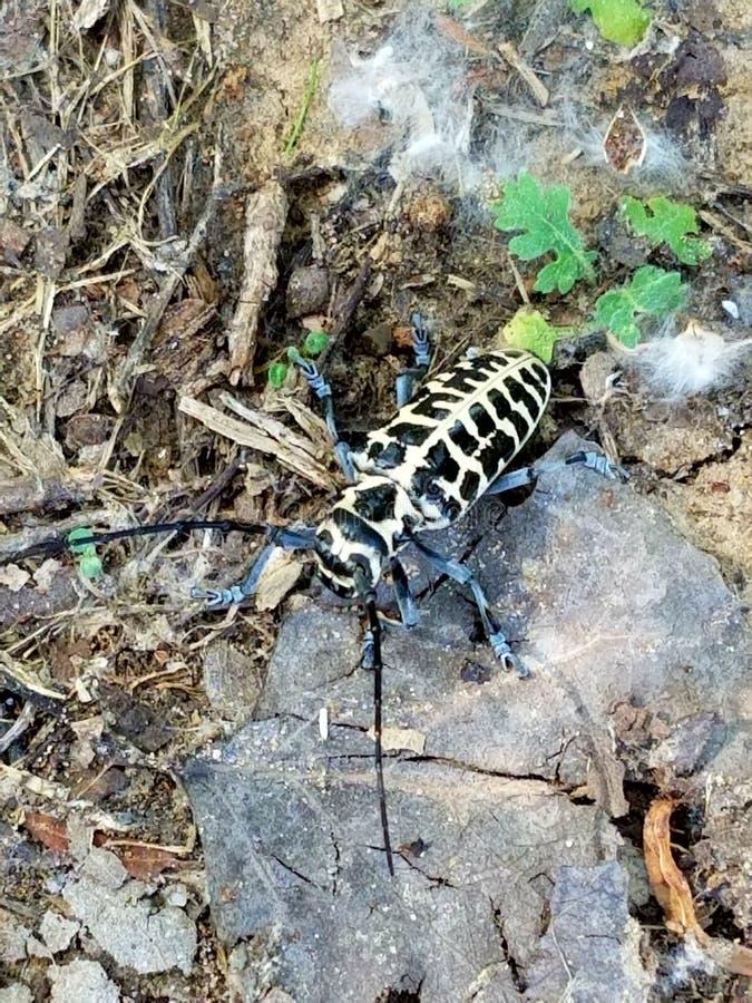 Opinión superior del escarabajo foto de archivo libre de regalías