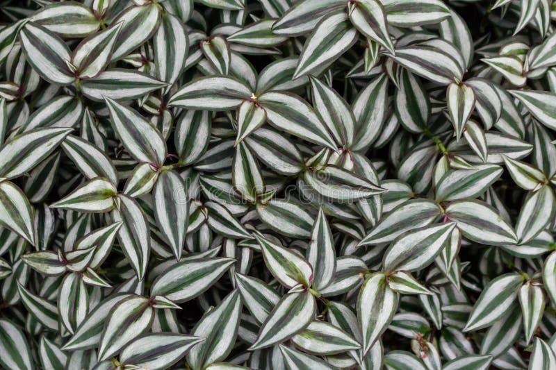Opinión superior del fondo rayado de las hojas Papel pintado floral del primer imágenes de archivo libres de regalías