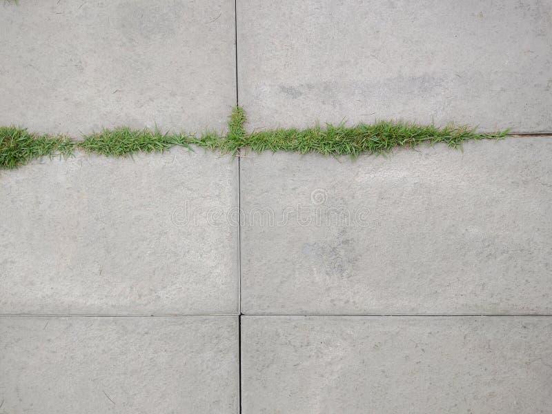 Opinión superior la hoja de piedra y la hierba minúscula en el jardín imagen de archivo