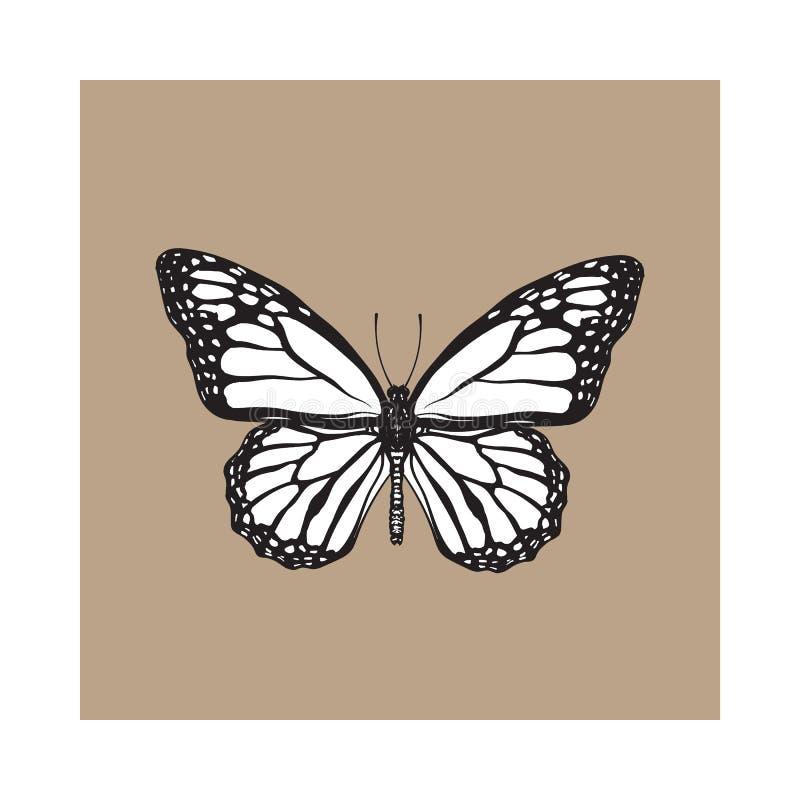 Opinión superior la mariposa de monarca hermosa, ejemplo aislado del estilo del bosquejo libre illustration