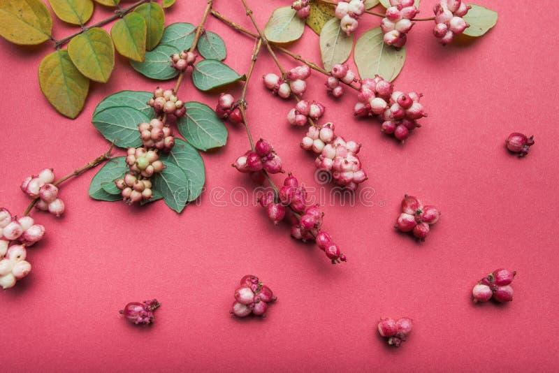 Opinión superior las bayas decorativas del bosque en un fondo rosado fotografía de archivo libre de regalías