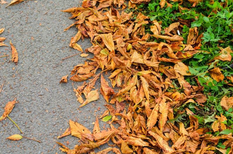 Opinión superior las hojas amarillas de la castaña putrefacta del otoño y la hierba verde en el camino gris fotografía de archivo