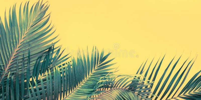Opinión superior puesta plana de las hojas de palma tropicales de las variaciones fotografía de archivo libre de regalías