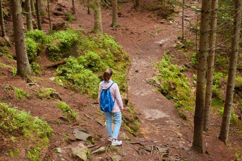 Opinión trasera el viajero activo que vaga entre el toldo de árboles, eligiendo una mejor trayectoria, buscando para la salida co imagen de archivo libre de regalías