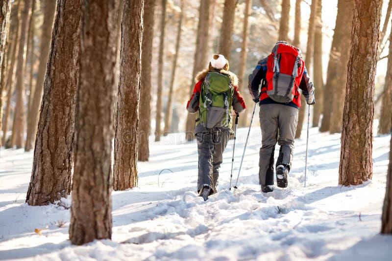 Opinión trasera montañeses en bosque imagen de archivo