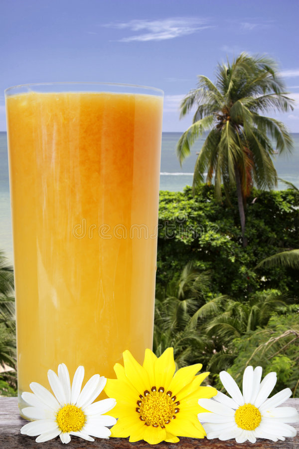 Opinión tropical de la bebida fotografía de archivo