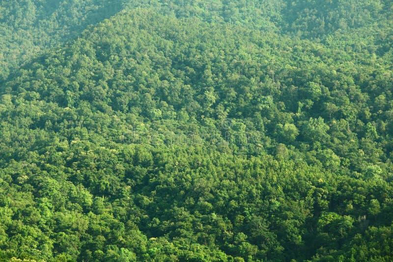 Opinión verde del bosque de la montaña fotos de archivo libres de regalías