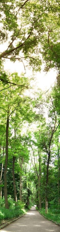 Opinión vertical del bosque imagen de archivo
