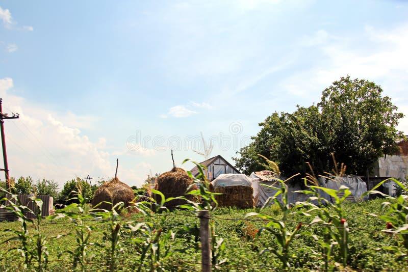 Opiniões da paisagem da natureza, dos campos, das vilas e das estradas de Ucrânia Vista da janela de carro ao conduzir foto de stock