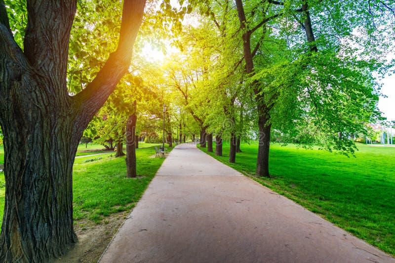 Opini?n de la primavera en el parque de Letna, Praga, Rep?blica Checa Primavera en Praga (Praga), parque hermoso de Letna (Letens fotos de archivo libres de regalías